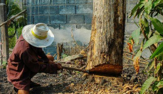 【庭木の伐採】庭の木を切ったらめちゃ大変だったので反省点を語るよ