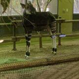 【赤ちゃんも楽しめる】よこはま動物園ズーラシアの見どころ9選!【所要時間も解説】