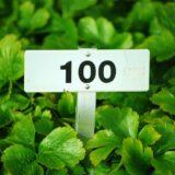 【ブログ運営】100記事到達しました!【経過報告】